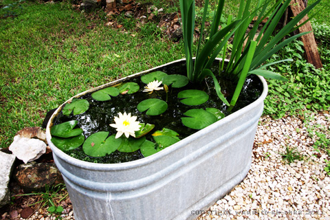 Fish pond my soul doth delight for Simple koi pond design