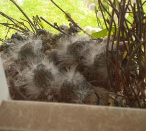 Baby birds #4