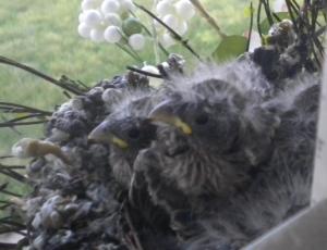 Baby birds #5