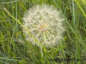 Badlands - flower pod