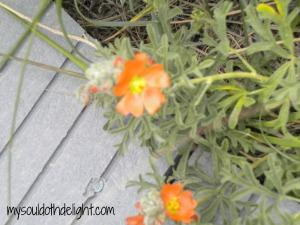 Badlands Orange Flower