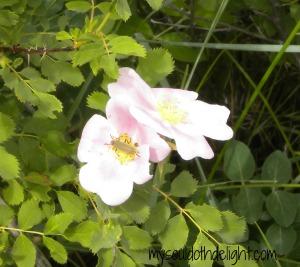 Badlands Pink Flower