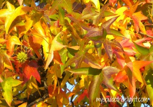 Fall 2013 - Up Close Green, Yellow, Red