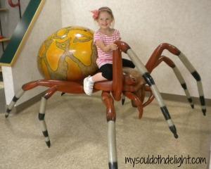 Sternburg Museum Spider