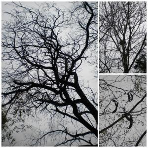 Fall Bare Trees