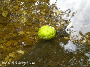 Floating Osage Orange