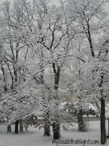 Snow Oak Trees