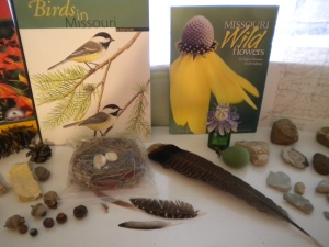 Nature Study Birds
